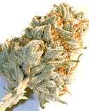 Honolulu Drug Addiction Treatment Pictures